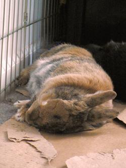Tigger napping on cardboard