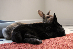 Tigger & Shadow sweetly napping together