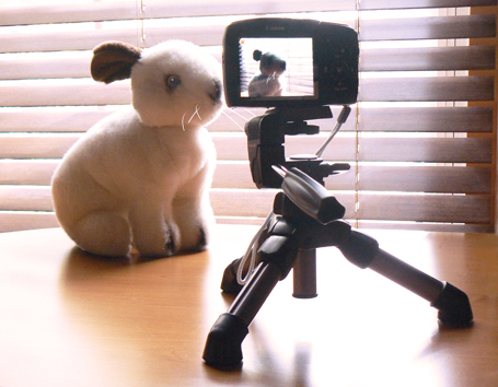 Bunny Photo Setup