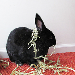 Shadow with a hay necklace