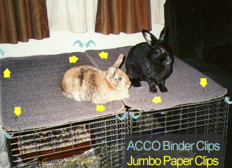 Tigger & Shadow on top of their cages