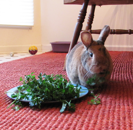 Tigger with plate of parsley