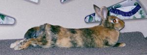 Long skinny Tigger bunny