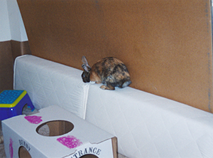 What bunny parents have to do to keep a Tigger safe ...