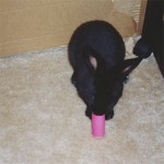 Shadow with a cardboard chew tube