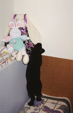 Shadow introducing himself to some stuffed rabbits