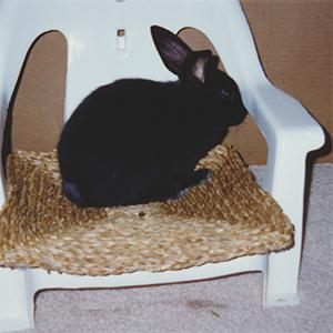 Shadow having fun on a grass mat