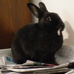 Shadow enjoys the newspapers