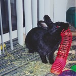 Shadow with his slinky
