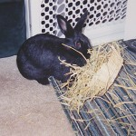 Shadow with a willow bowl full of hay