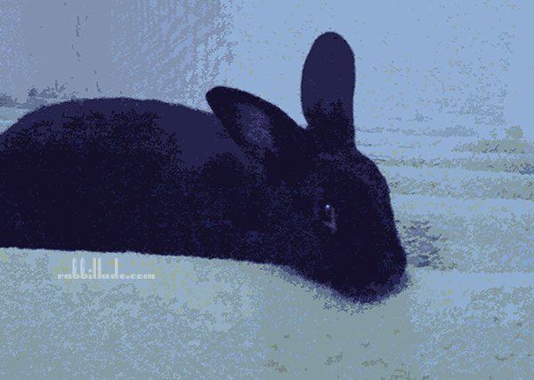 Altered Photo Artwork Piece with Shadow as Bunny Boy Blue