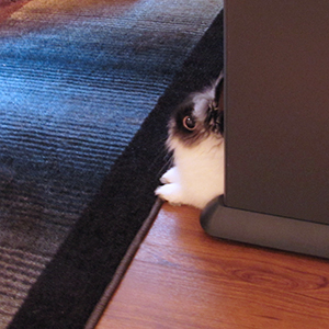 Leo lurking