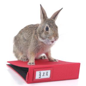 International Rabbit Day 2012