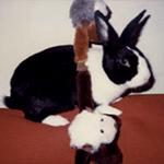 Thumper aka Bun Bun