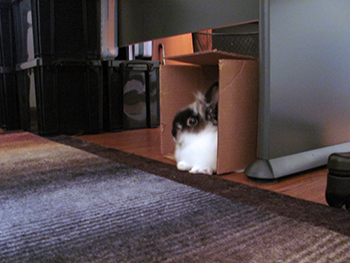Leo the Lionhead and his box