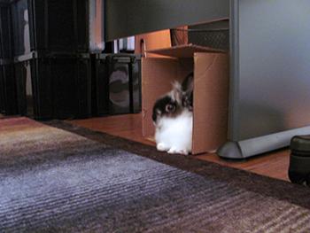 Leo the Lionhead and his box