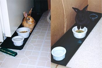 Plant trays being used as feeding trays