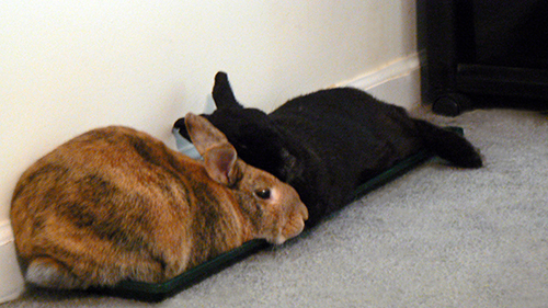 Plant tray as bunny furniture