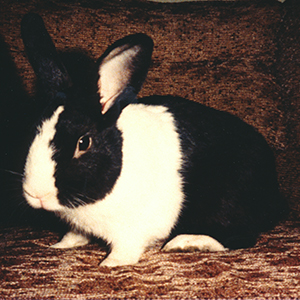 Thumper bunny rabbit