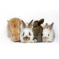 Bunny Rabbit Group