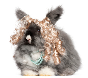 Bunny in wig and pearls