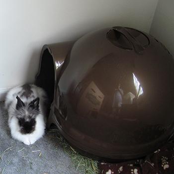 Booda Dome ???
