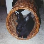 Shadow enjoying the willow tunnel