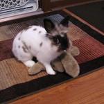 Leo with stuffed bunny girlfriend
